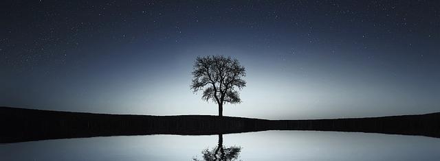 Einzelner Baum in einer Nachtlandschaft.